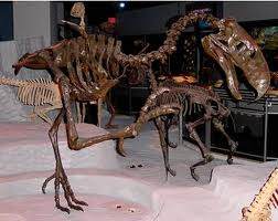 fossilizd terror bird